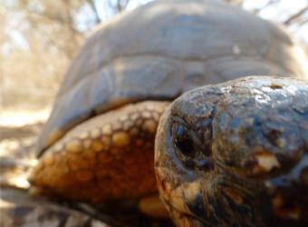 Ma tortue de Madagascar!